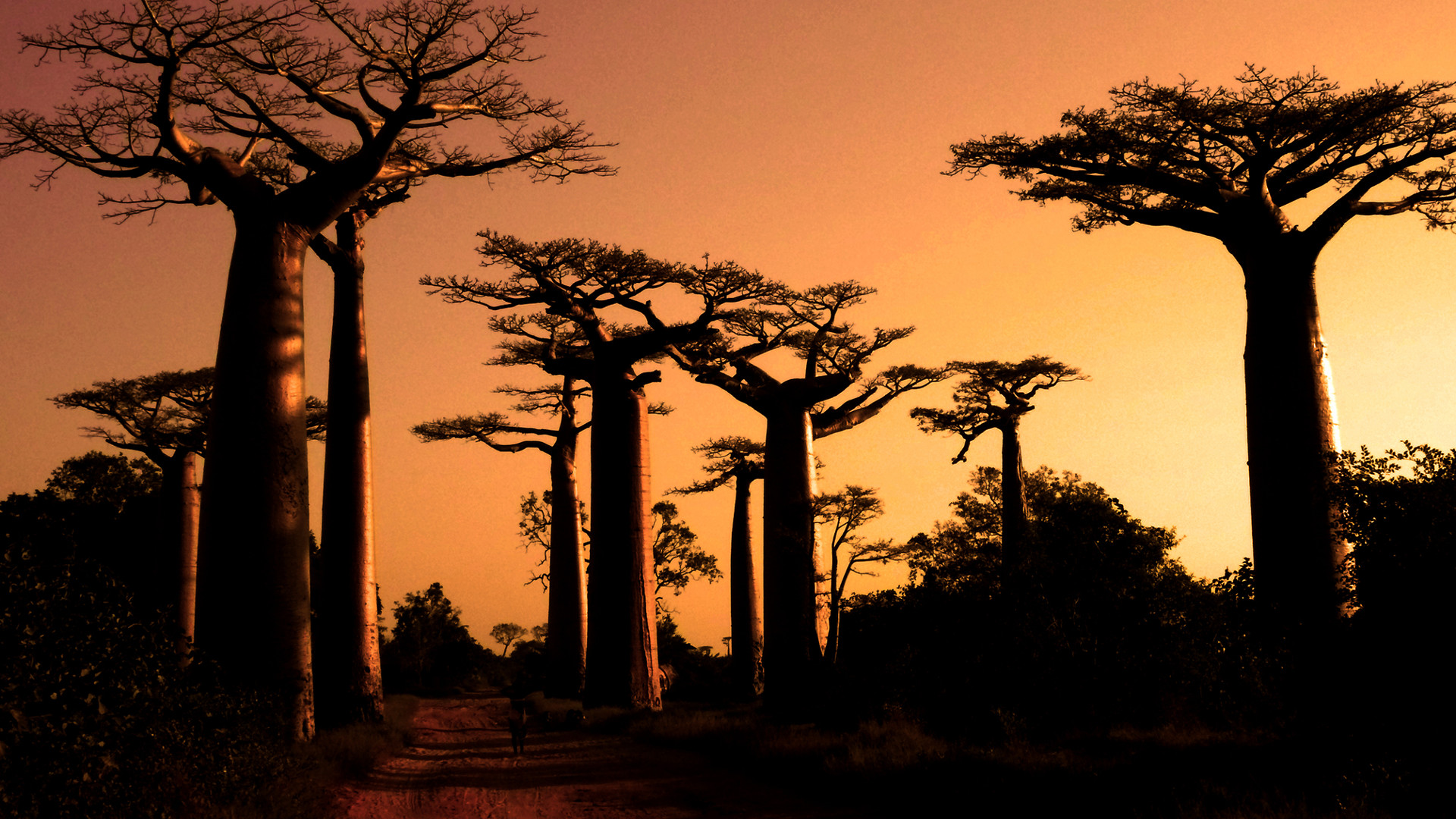 Custom Travel Planner Network-Madagascar-Avenus of the Baobabs