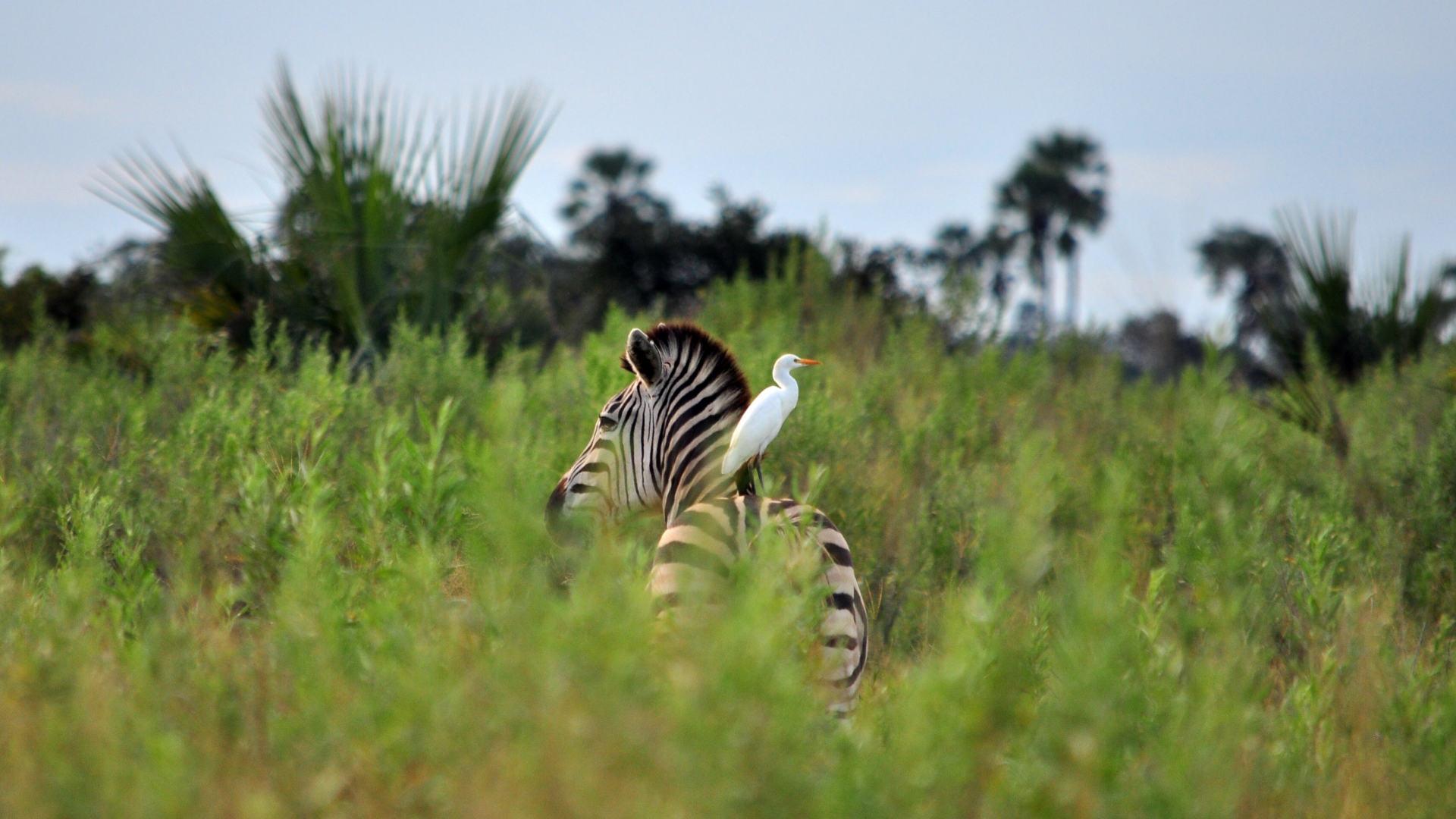 Custom Travel Planner Network-Botswana-Moremi-Game-Reserve