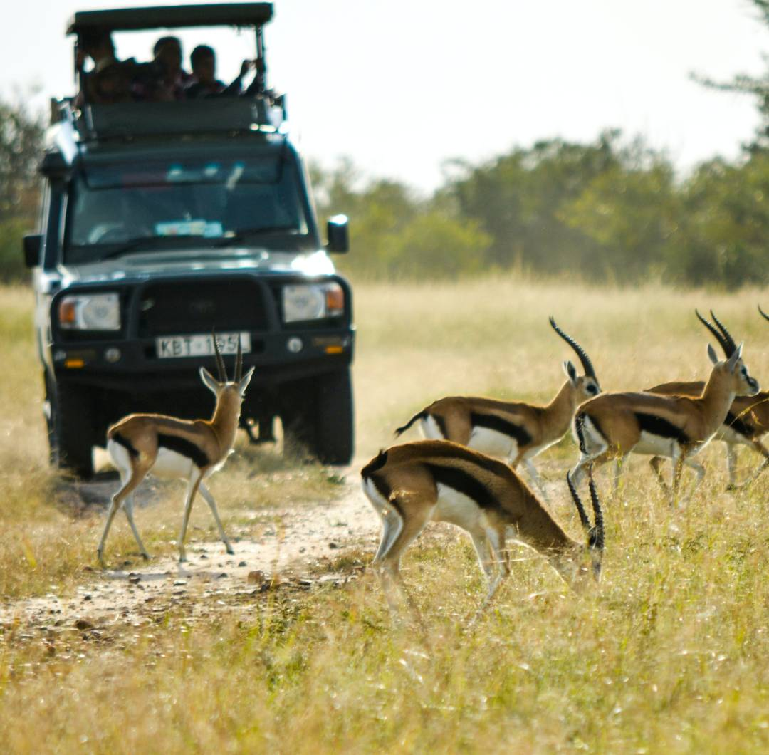 Custom-Travel-Planner-Network-1-Kenya-Maasai-Mara-Safari