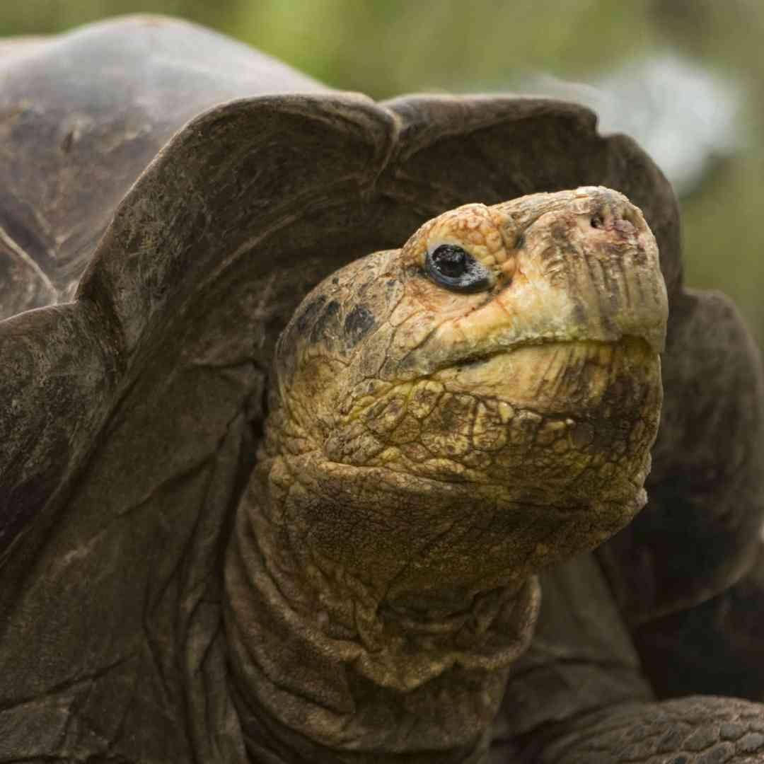 Custom-Travel-Planner-Network-1-SM-Ecuador-Galapagos-Turtoise