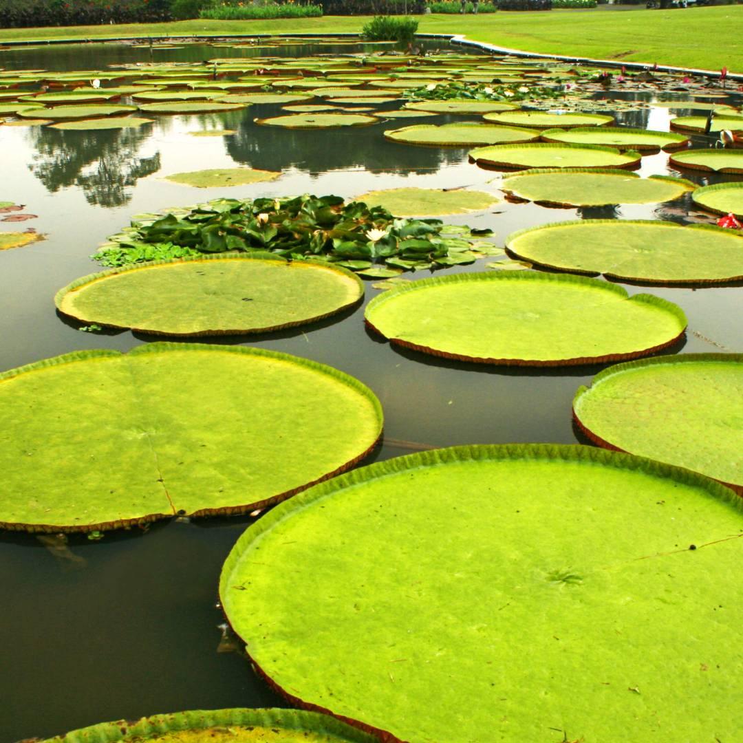 Custom-Travel-Planner-Network-10-Indonesia-Botanical-Gardens