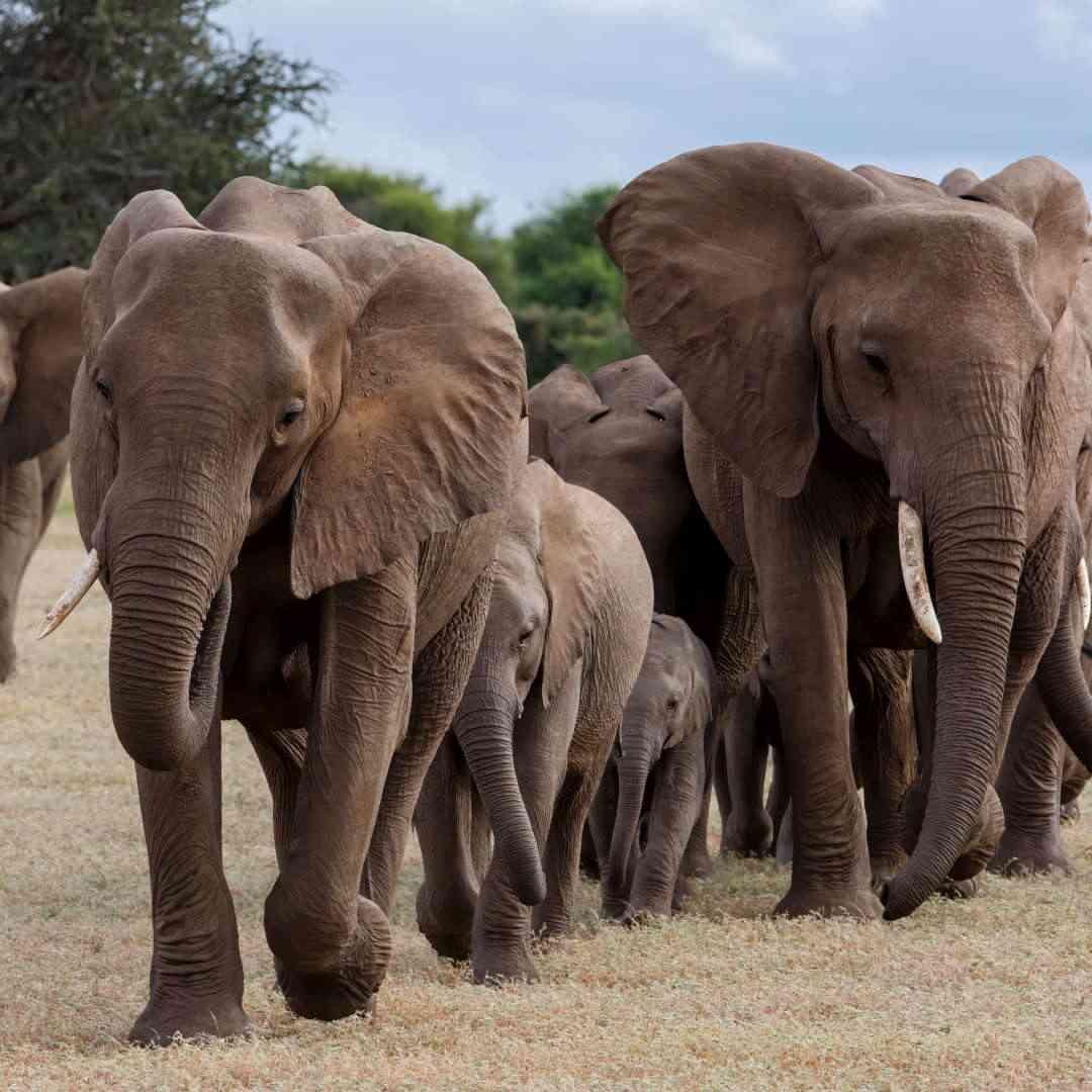 Custom-Travel-Planner-Network-2-SM-Botswana-Mashatu-Game-Reserve