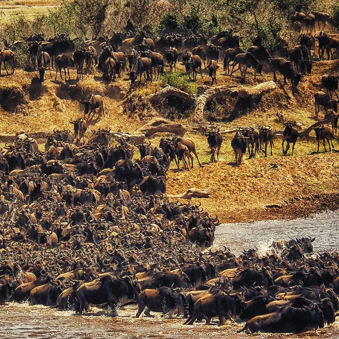 Custom-Travel-Planner-Network-3-Kenya-Wildebeest-Migration