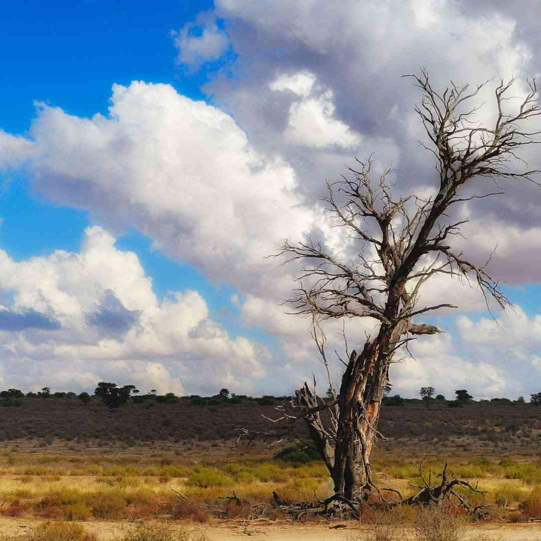 Custom-Travel-Planner-Network-4-SM-Botswana-Kalahari-Desert