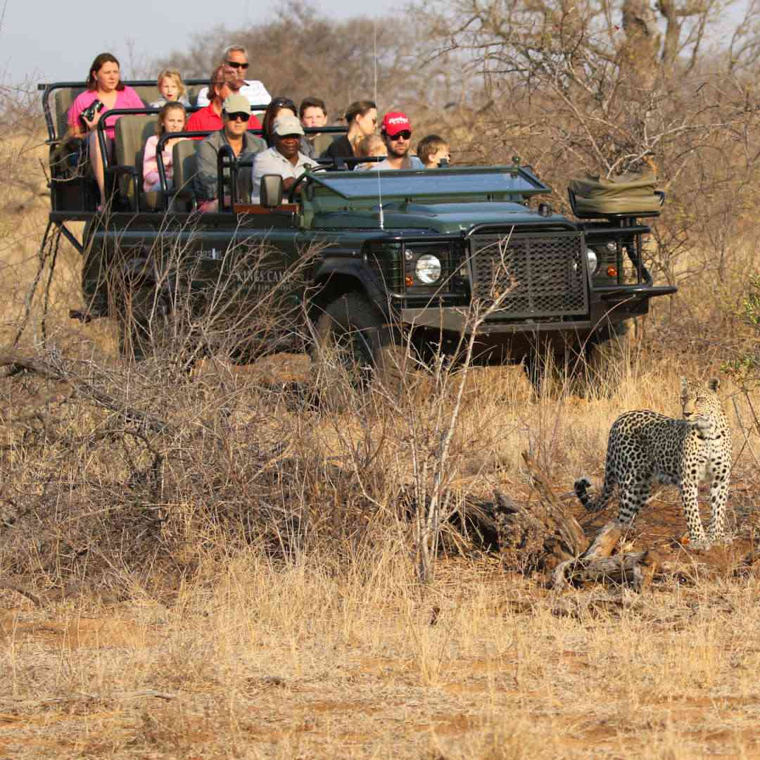 Custom-Travel-Planner-Network-4-SM-South-Africa-Safari-Drive