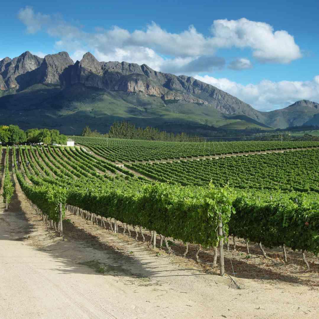 Custom-Travel-Planner-Network-5-SM-South-Africa-Vineyards