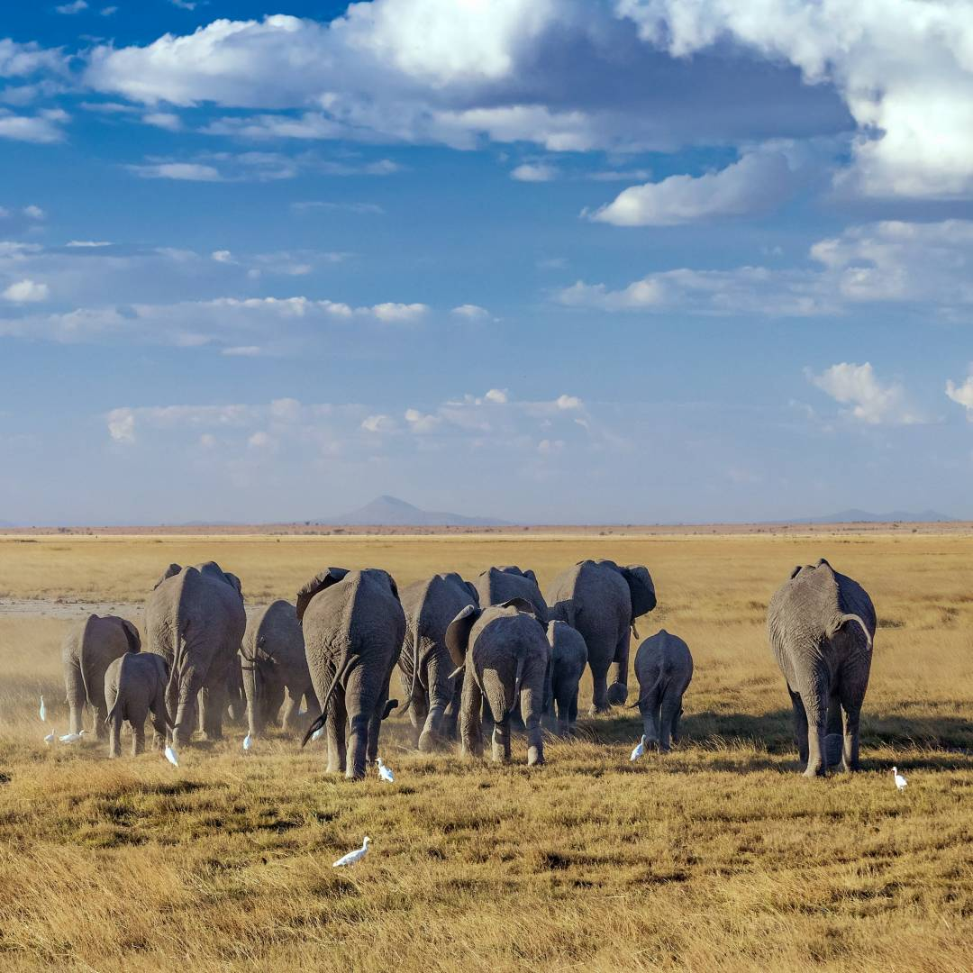 Custom-Travel-Planner-Network-6-Kenya-Amboseli-National-Park