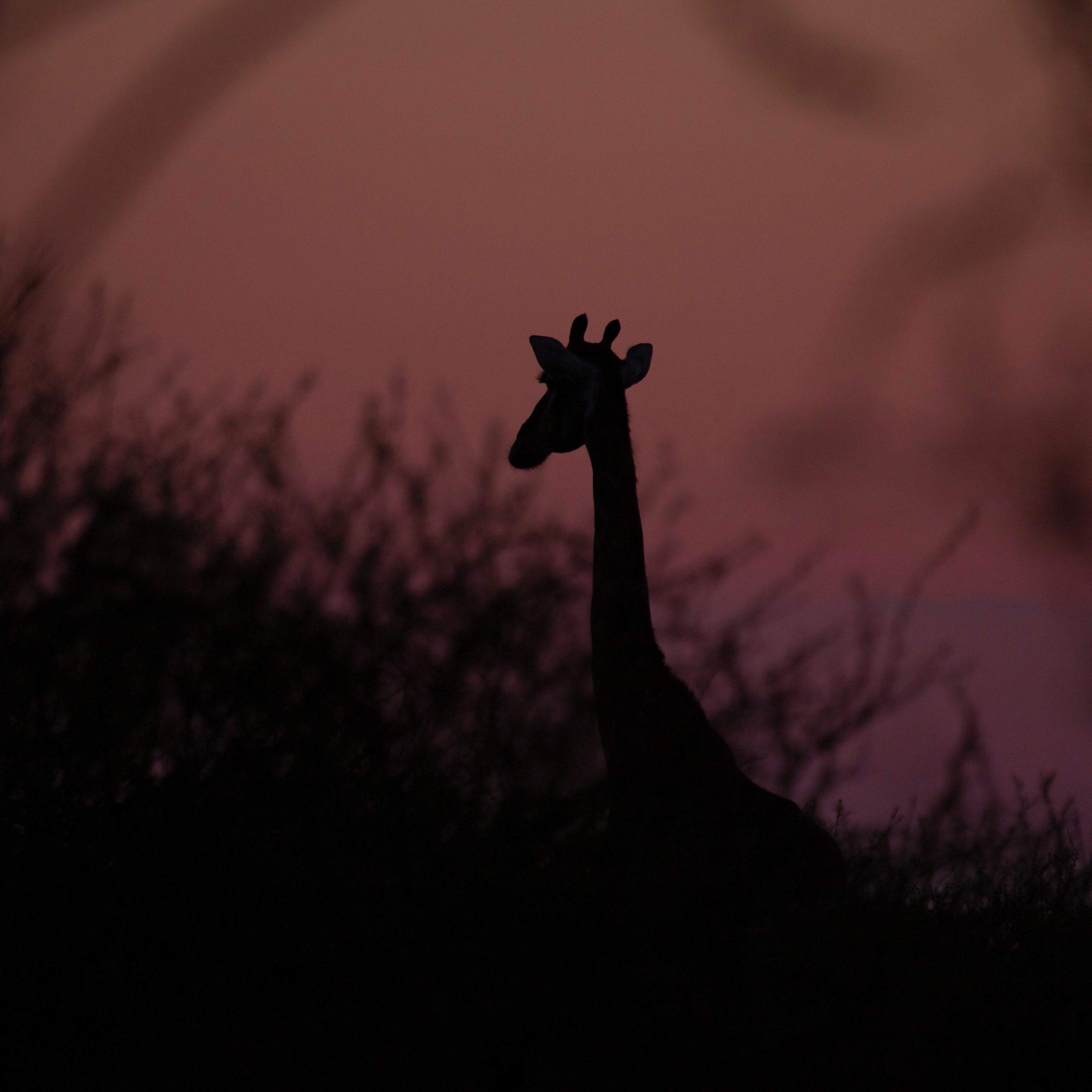 Custom-Travel-Planner-Network-8-Botswana-Night-Game-Drive-Mokolodi-Nature-Reserve