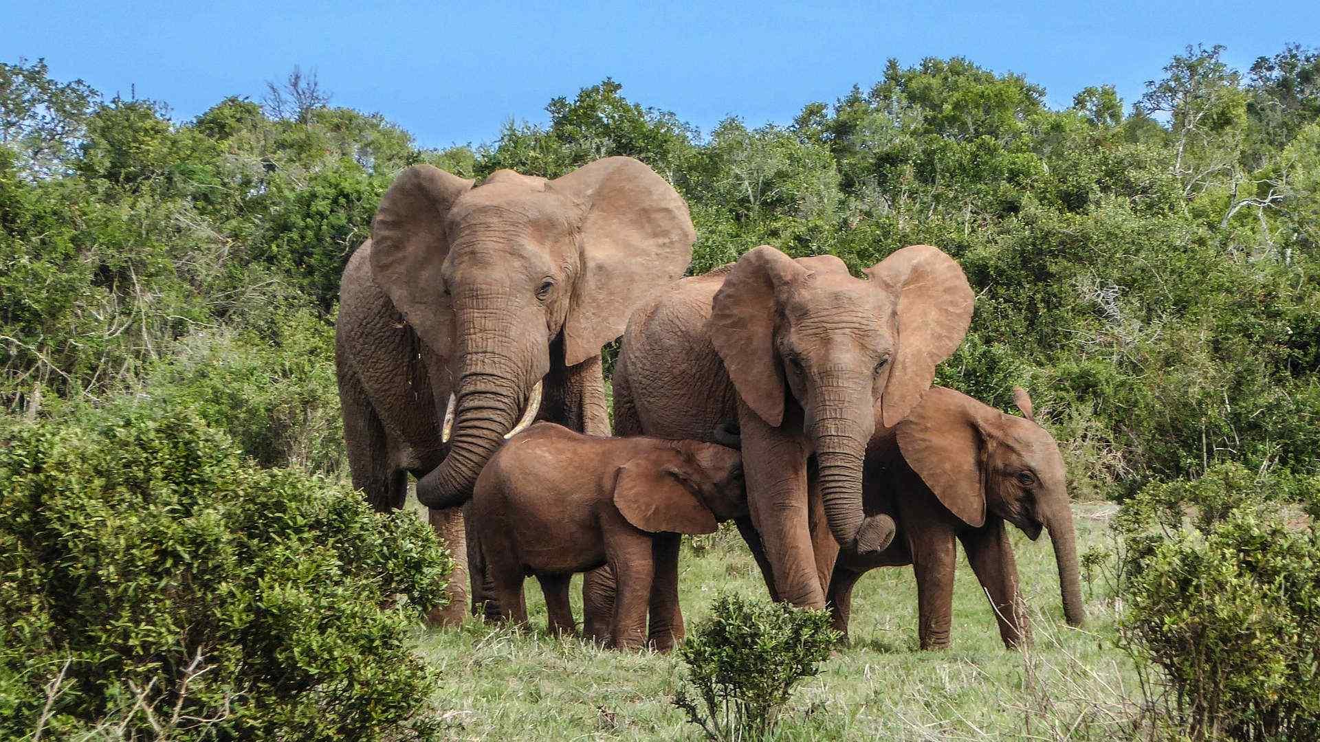 Custom-Travel-Planner-Network-South-Africa-Elephant-family