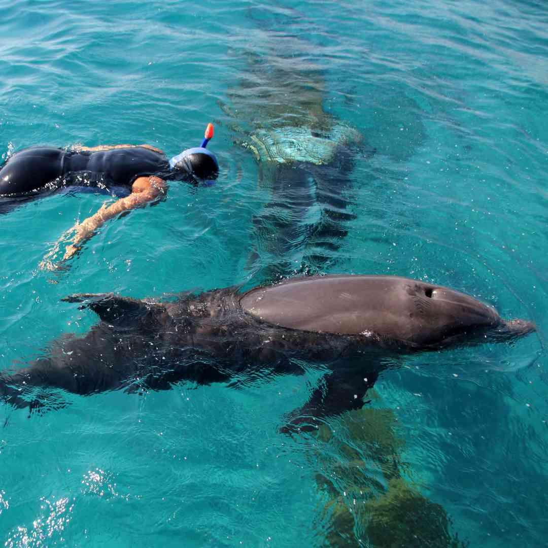 Custom-Travel-Planner-Network-7-SM-Israel-Eilat-Dolphinarium
