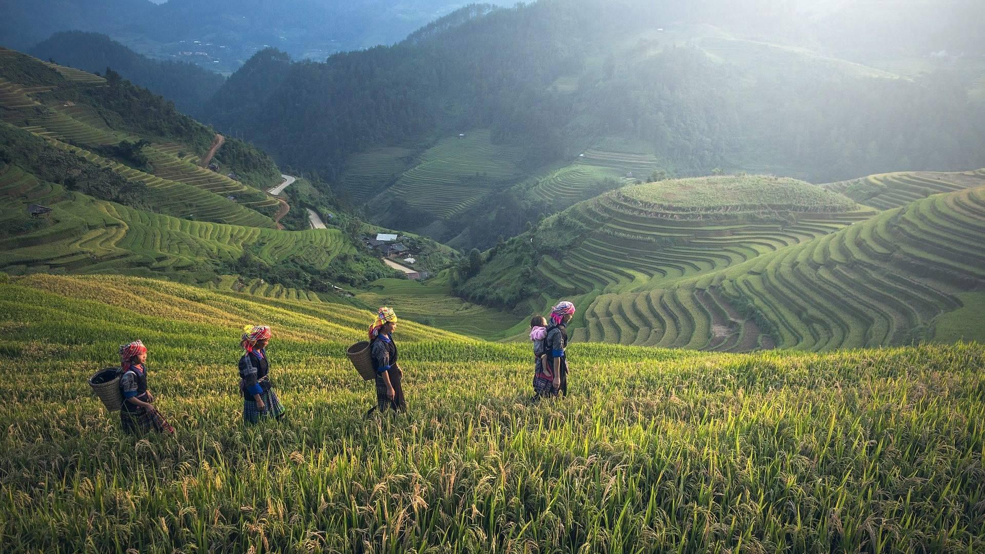 Custom-Travel-Planner-Network-Cambodia-Rice-Fields