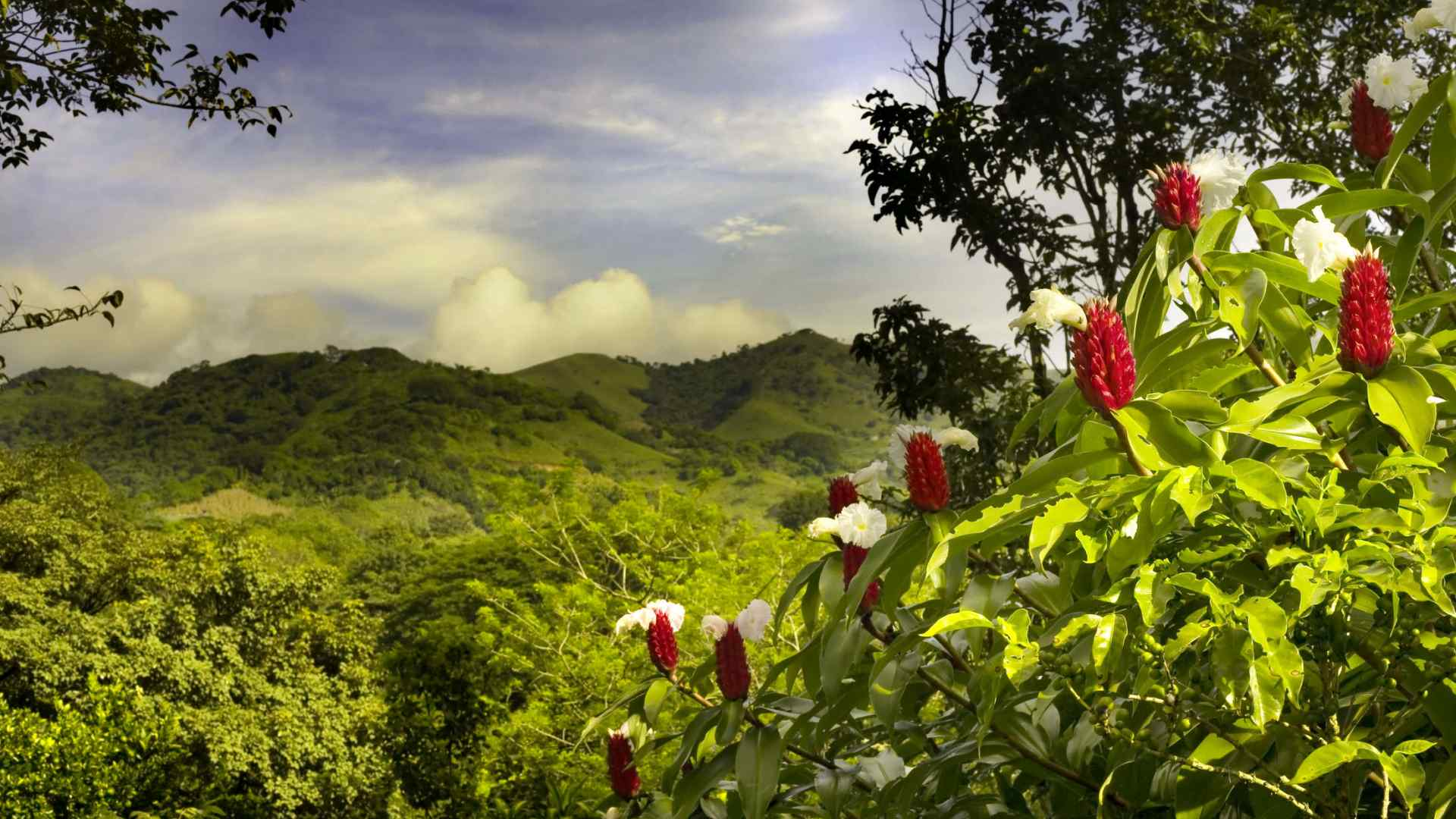 Custom-Travel-Planner-Network-Costa-Rica-Hills