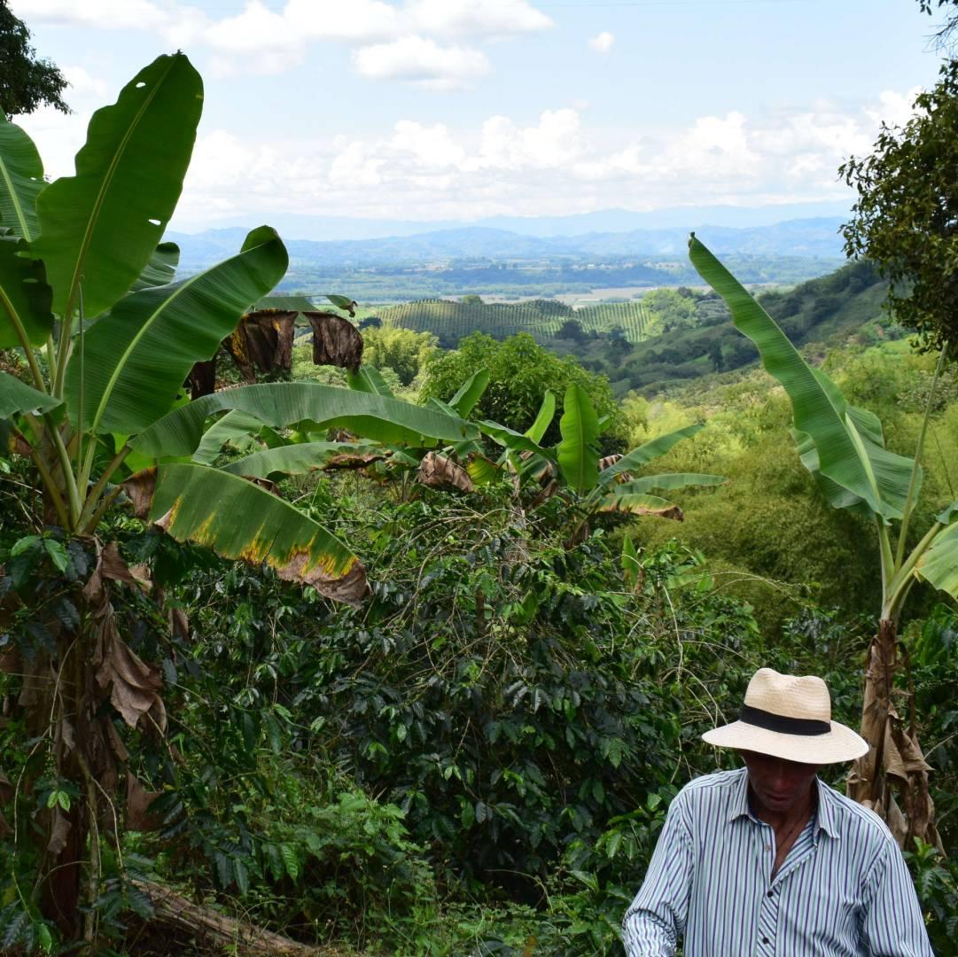 Custom-Travel-Planner-Network-1-Colombia-Coffee-Farm