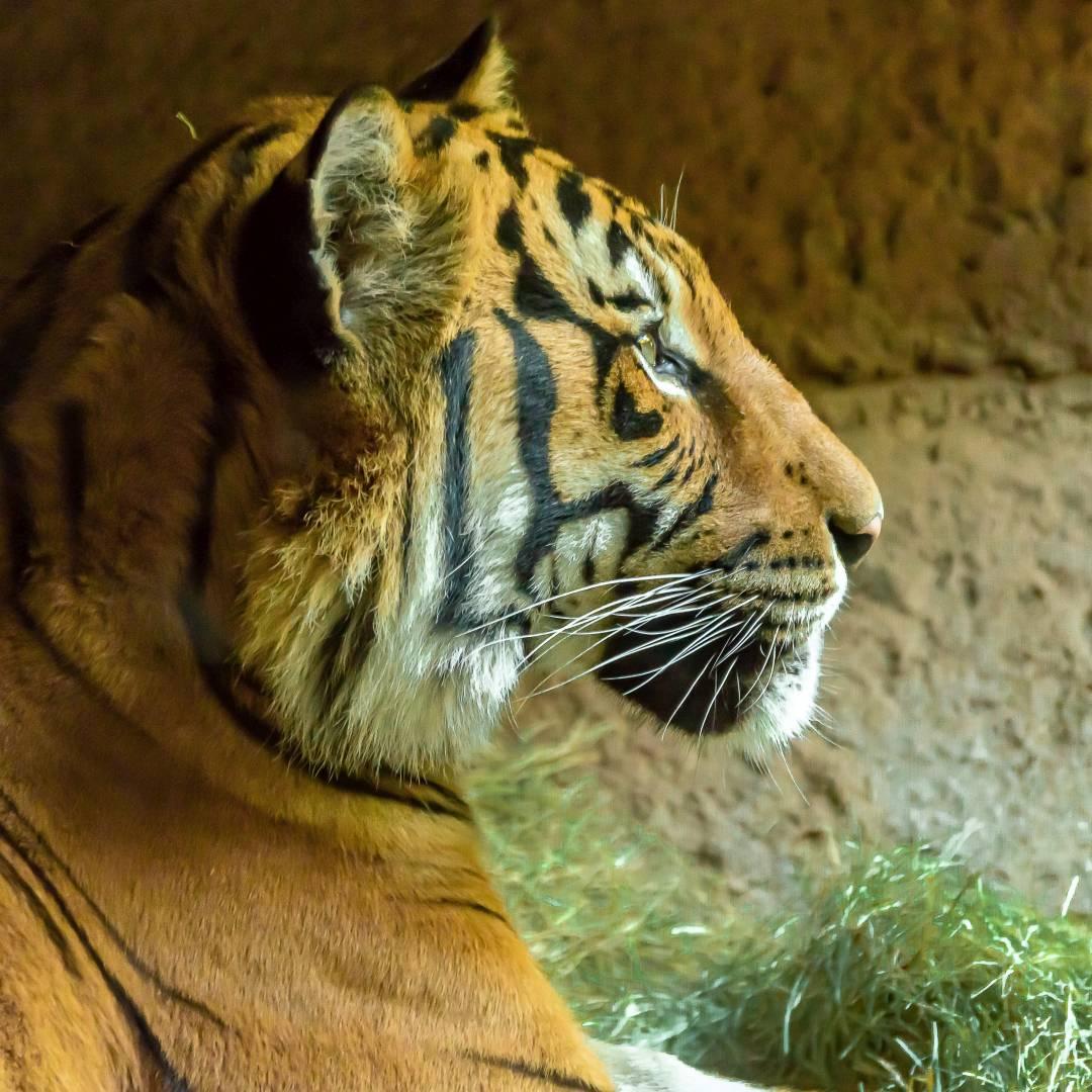 Custom-Travel-Planner-Network-5-California-San-Diego-Zoo