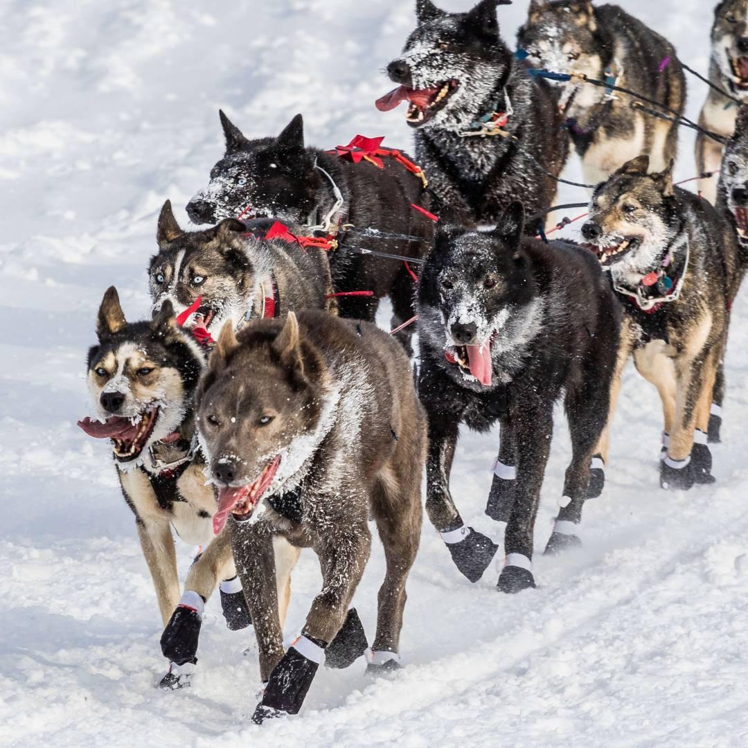 Custom-Travel-Planner-Network-9-SM-Alaska-Iditarod