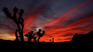 Custom-Travel-Planner-Network-California-Joshua-Tree-NP
