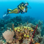 Custom Travel Planner Network-Belize-Diving Blue Hole