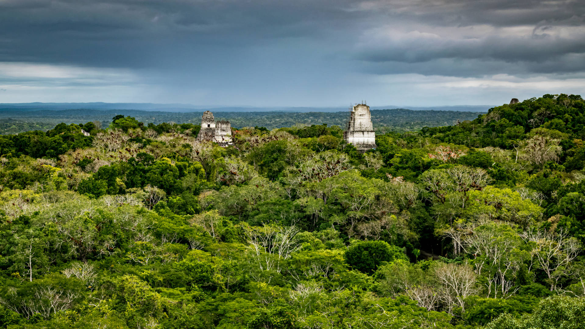 Custom Travel Planner Network-Guatemala-Tikal in Jungle