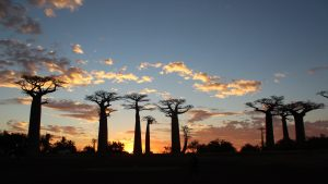 Custom Travel Planner Network-Madagascar-Avenue of the Baobabs