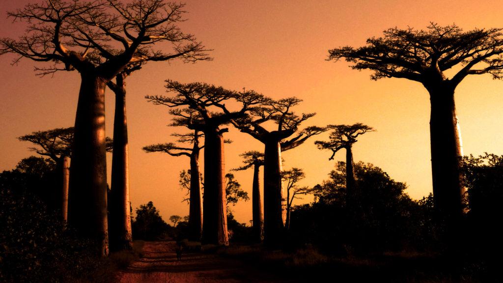 Custom Travel Planner Network-Madagascar-Avenus of the Baobabs
