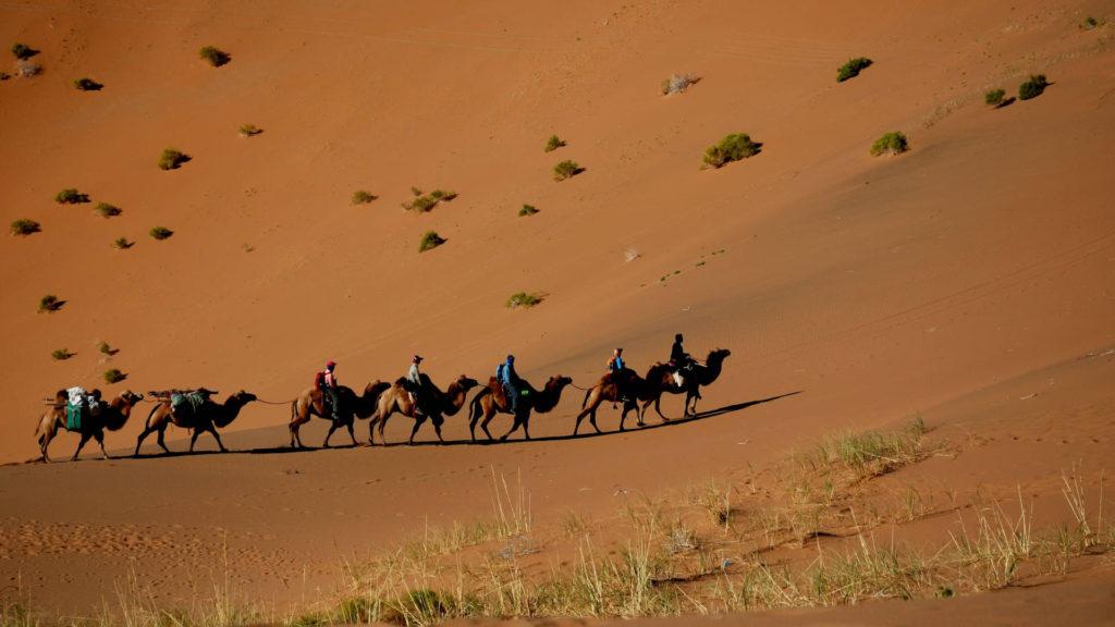 Custom Travel Planner Network-Mongolia-Camel Caravan in Gobi Desert