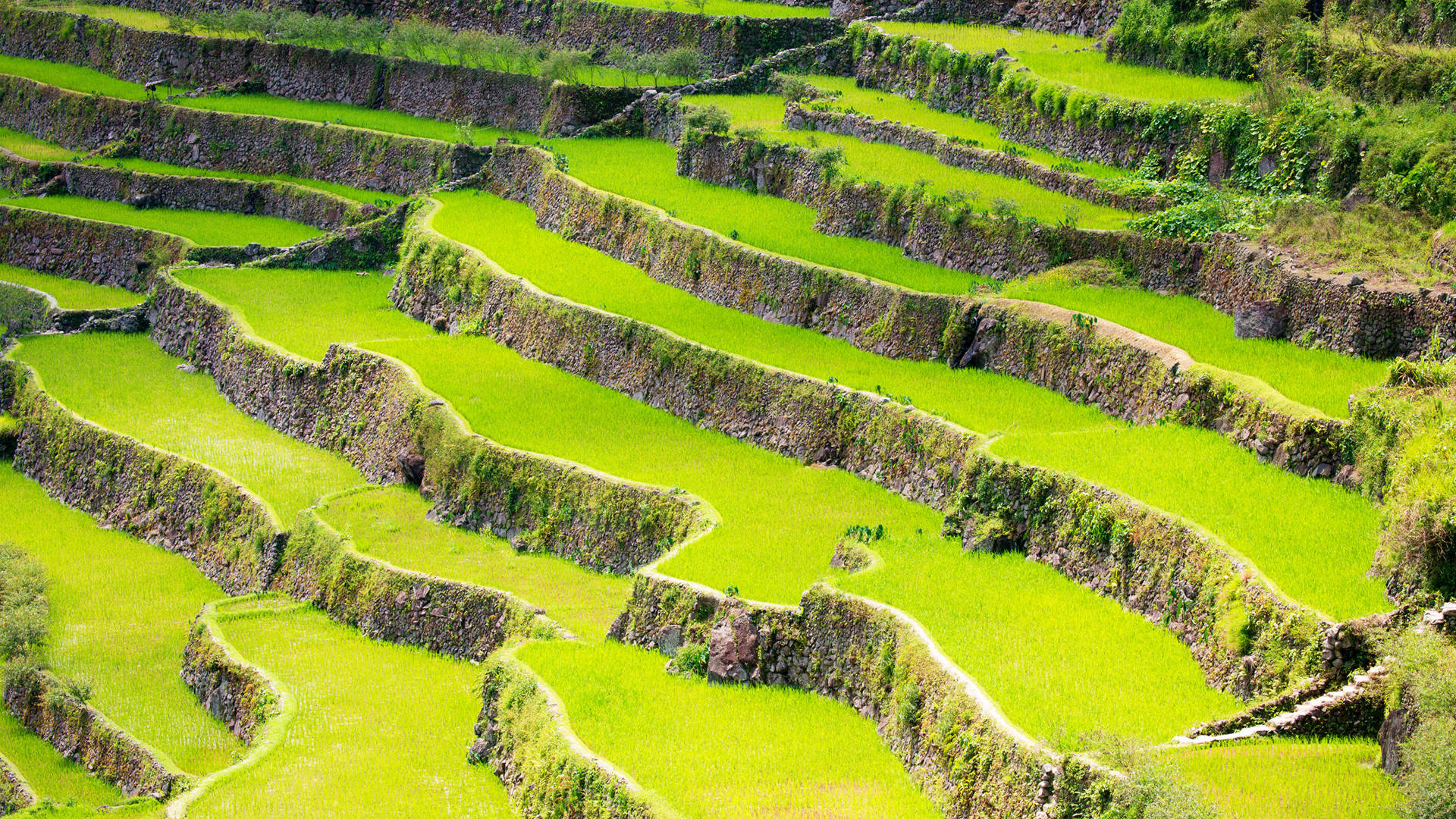 Custom Travel Planner Network-Philippines-Banaue Rice Fields