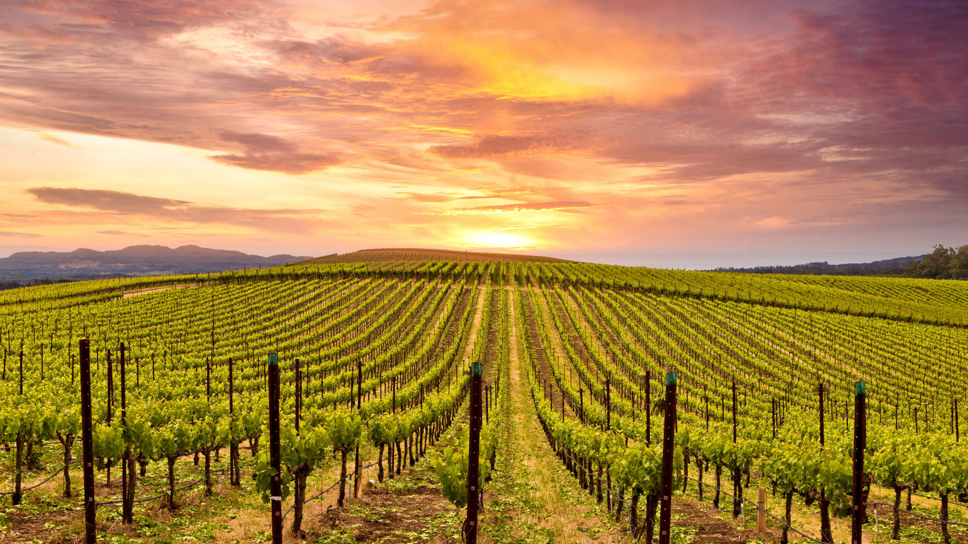 Custom Travel Planner Network-USA-Napa-Vineyard Sunset