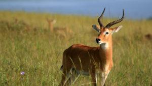 Custom Travel Planner Network-Uganda-Impala