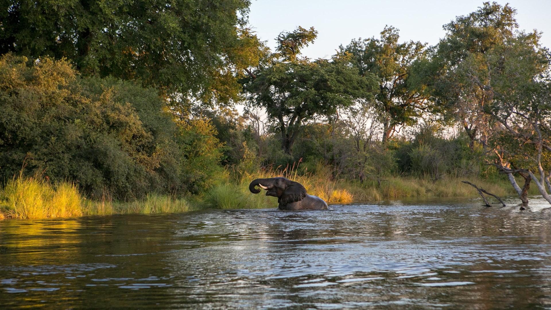 Custom Travel Planner Network-Zambia-Elephant