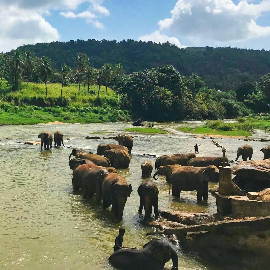 Custom-Travel-Planner-Network-2-SM-Sri-Lanka-Pinnawala-Elephant-Orphanage