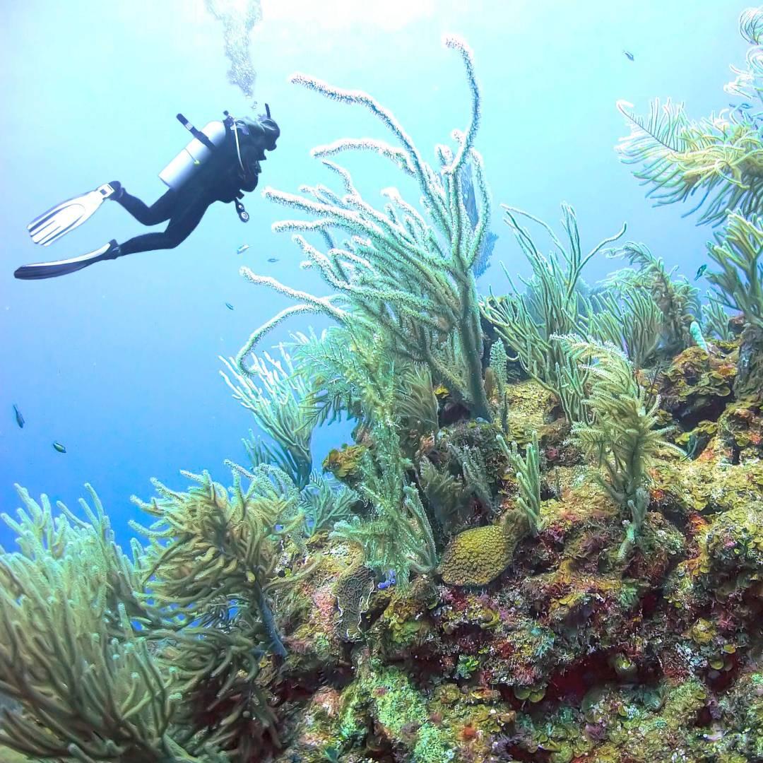 Custom-Travel-Planner-Network-1-Honduras-Utila-Coral-Reef