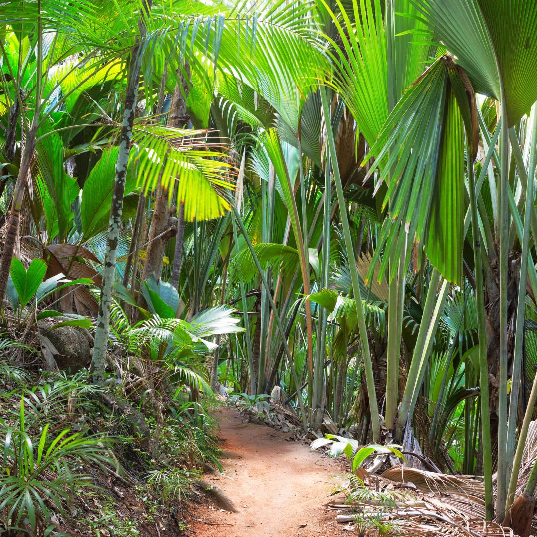 Custom-Travel-Planner-Network-10-Seychelles-Vallee-De-Mai