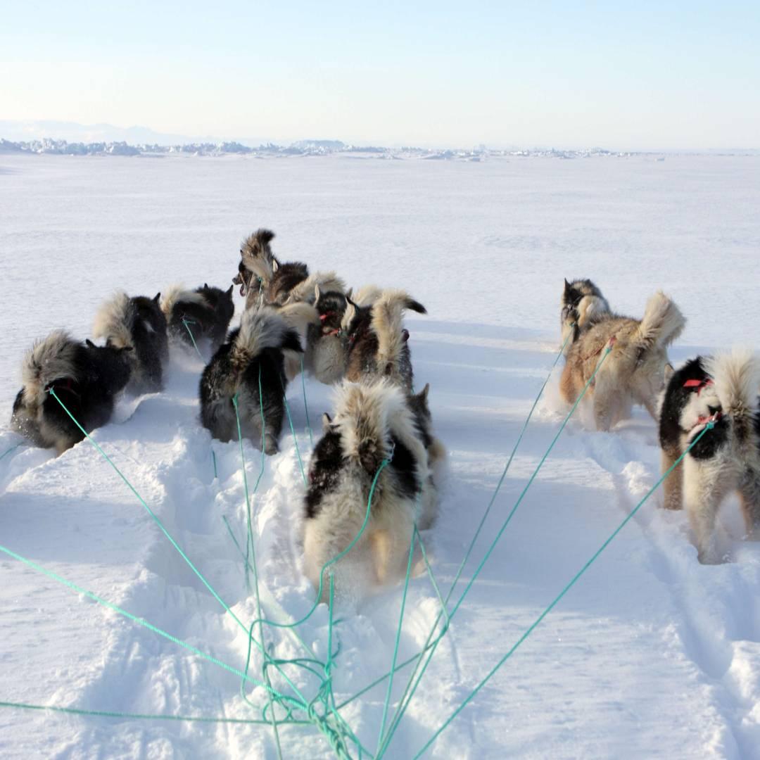 Custom-Travel-Planner-Network-2-Greenland-Dog-Sledding