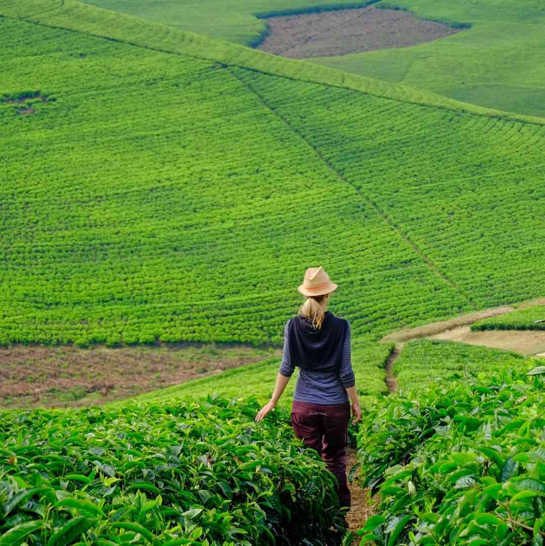 Custom-Travel-Planner-Network-2-SM-Rwanda-Tea-Farm