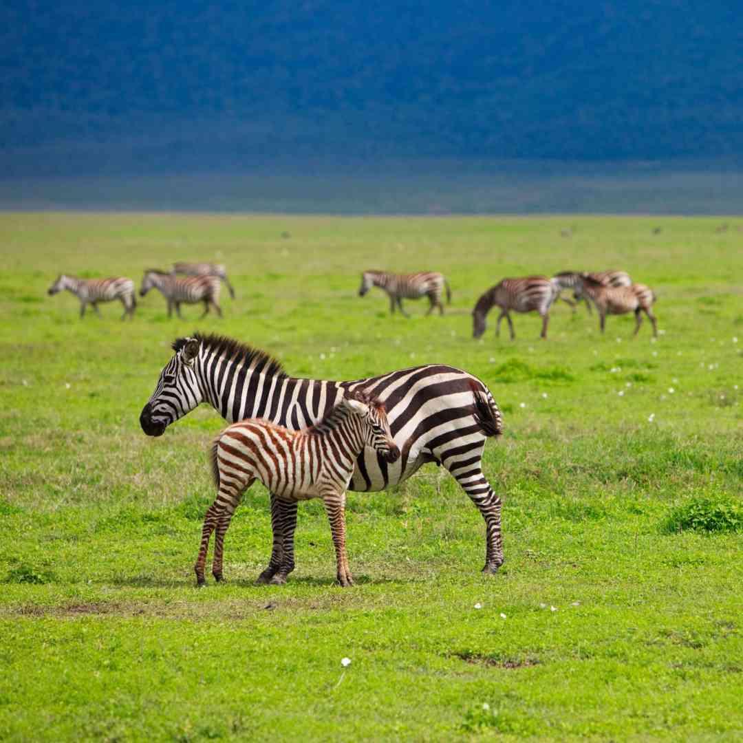 Custom-Travel-Planner-Network-2-SM-Tanzania-Ngorongoro-Crate