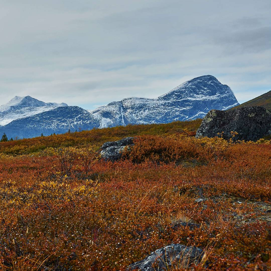 Custom-Travel-Planner-Network-3-Greenland-Fall