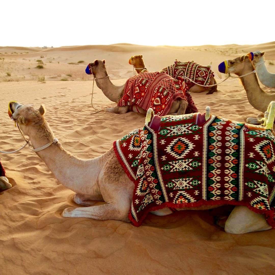 Custom-Travel-Planner-Network-3-UAE-Desert-Safari