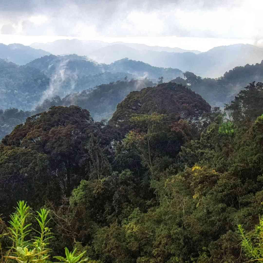 Custom-Travel-Planner-Network-4-SM-Rwanda-Nyungwe-NP-Rainforest