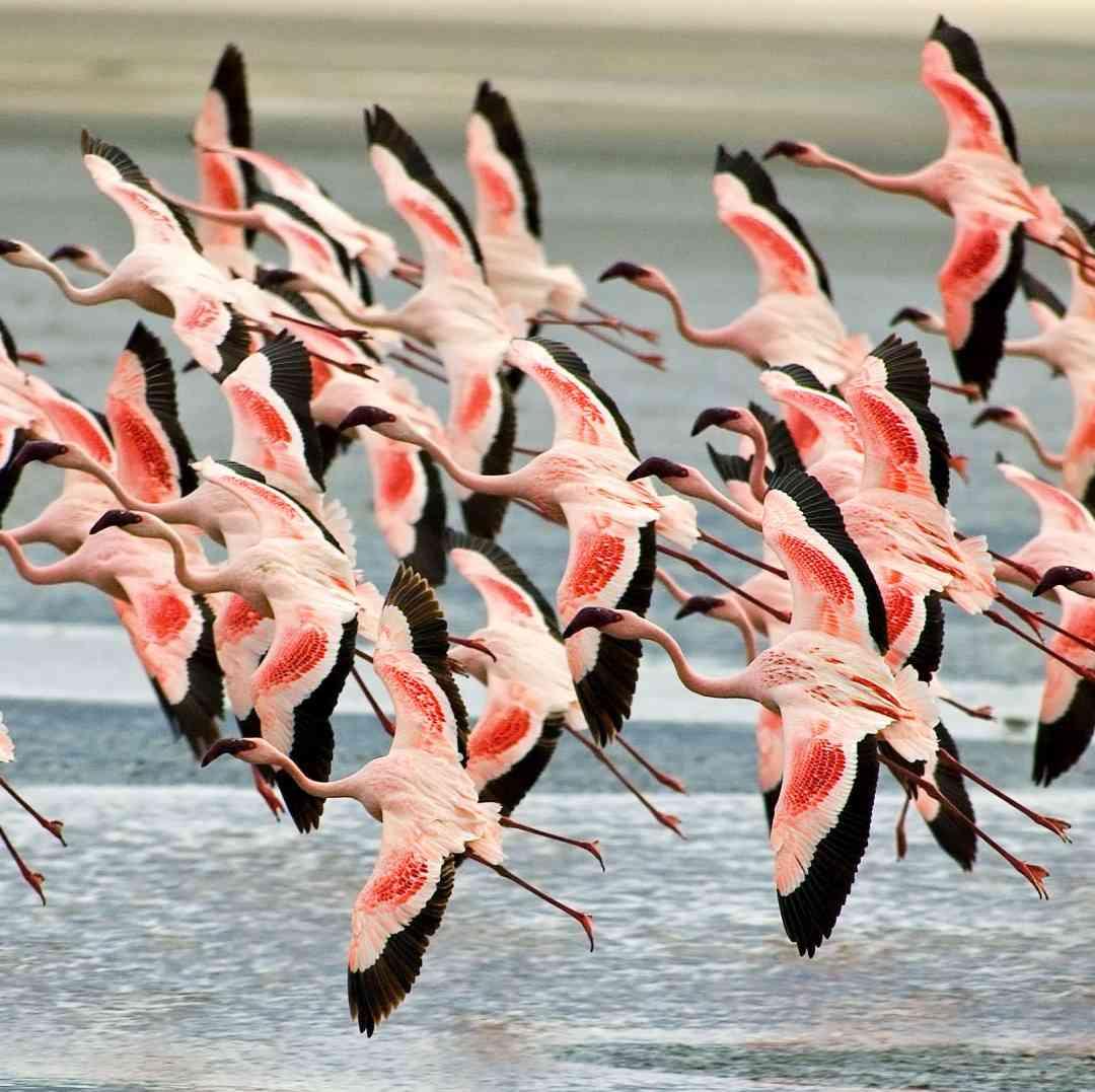 Custom-Travel-Planner-Network-6-SM-Tanzania-Flamingos-over-Ngorongoro