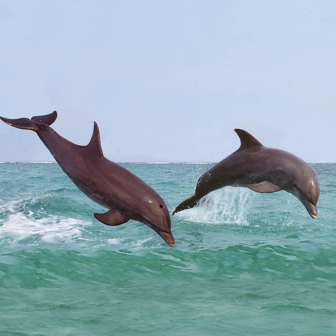 Custom-Travel-Planner-Network-7-Honduras-Bottle-Nose-Dolphin