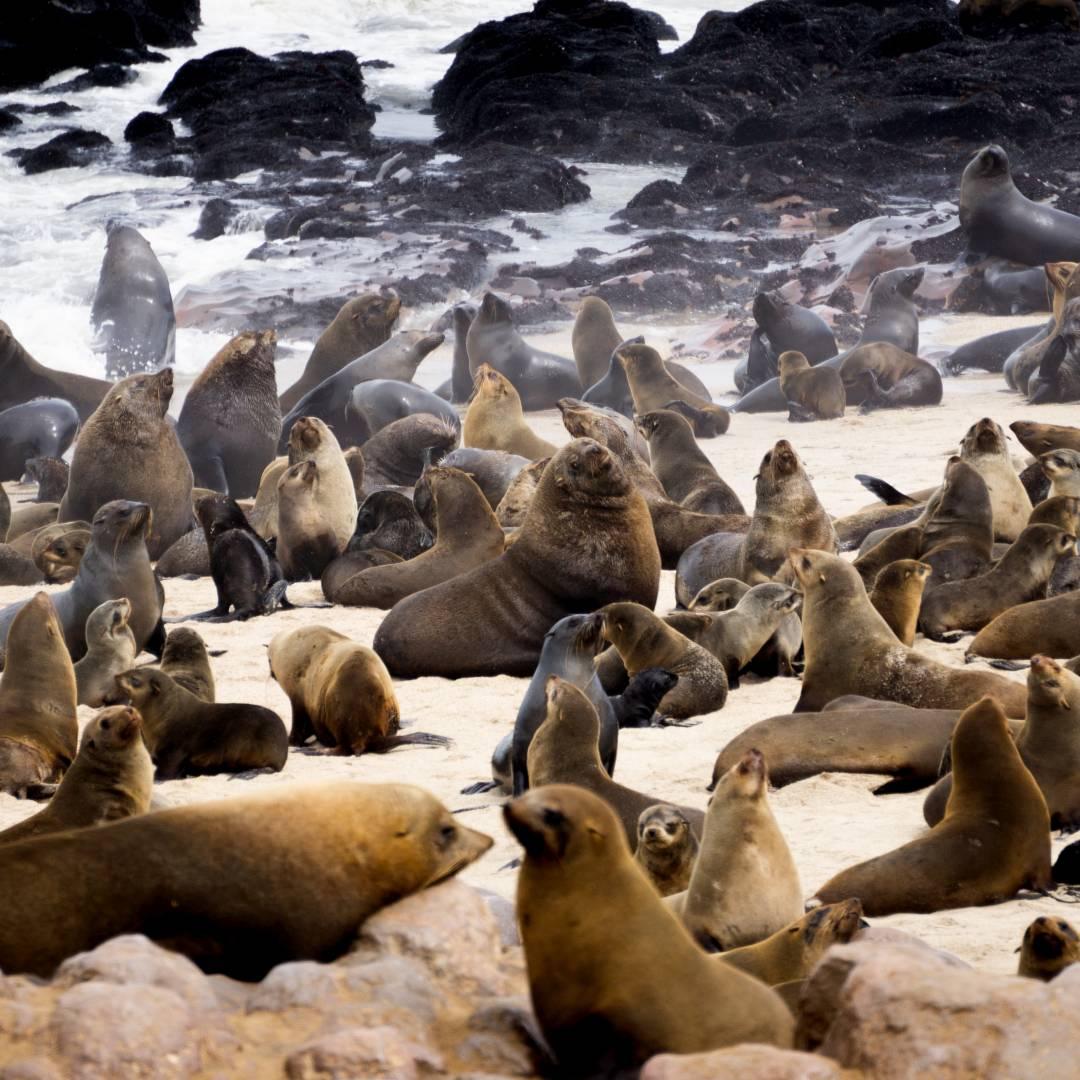 Custom-Travel-Planner-Network-7-SM-Namibia-Cape-Cross-Fur-Seals
