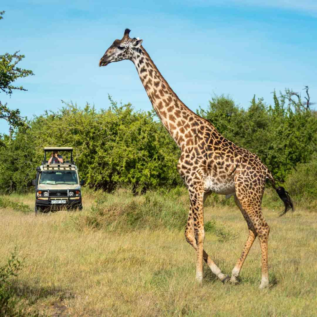 Custom-Travel-Planner-Network-7-SM-Tanzania-Game-Reserve