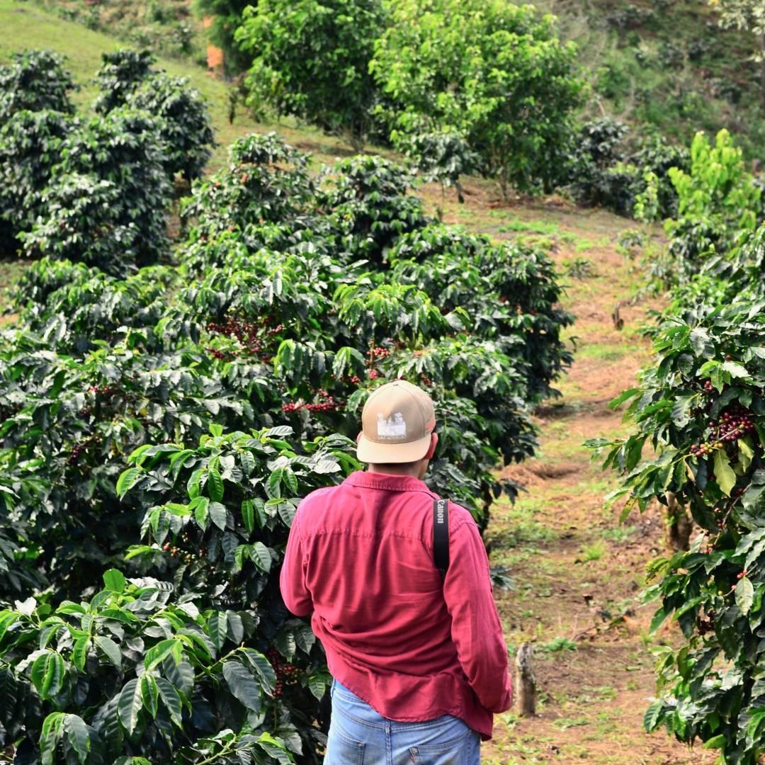 Custom-Travel-Planner-Network-8-Honduras-Coffee-Farm