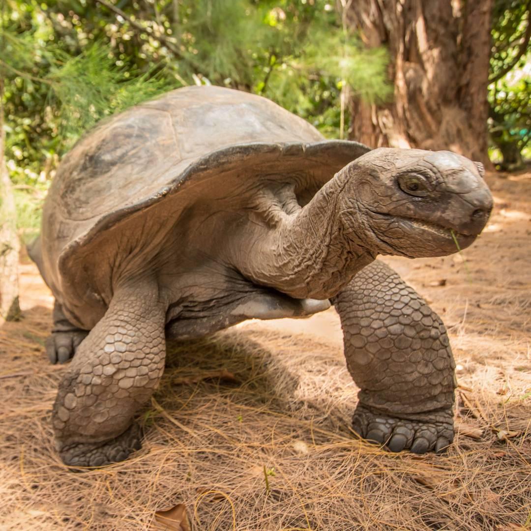 Custom-Travel-Planner-Network-9-Seychelles-Giant-Aldabra-Tortoise