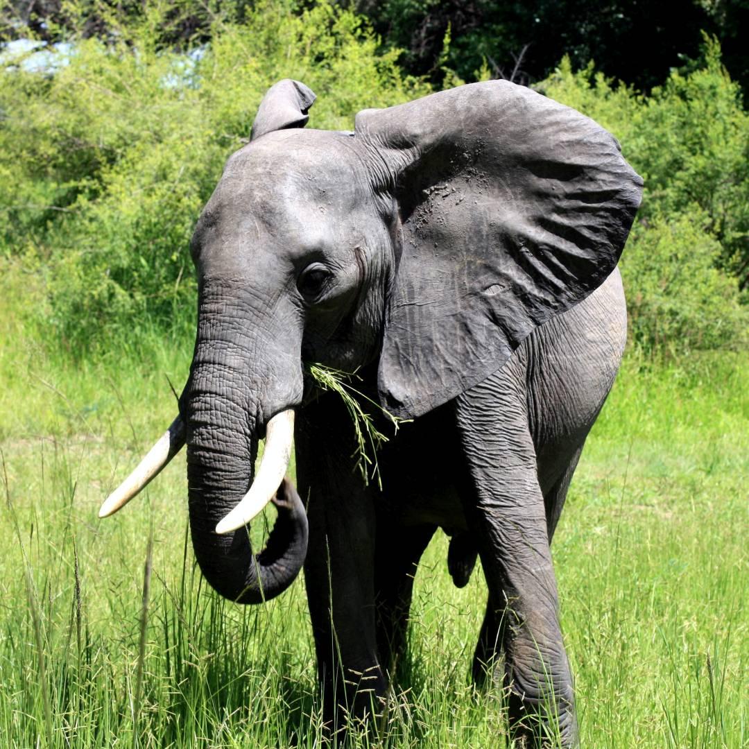 Custom-Travel-Planner-Network-9-Zambia-South-Luangwa-National-Park