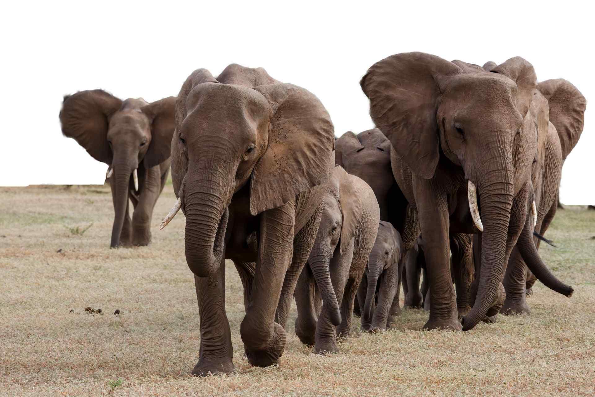 Custom Travel Planner Network-Botswana-Mashatu Game Reserve