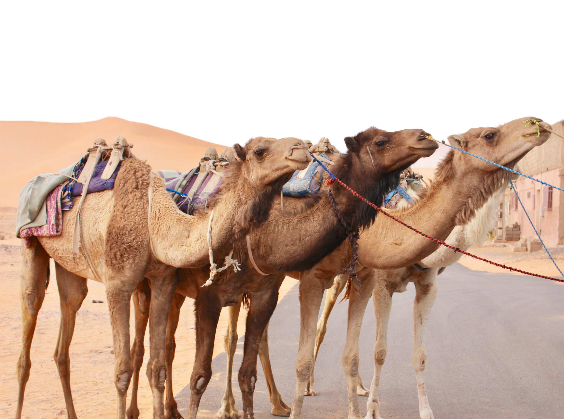 Custom-Travel-Planner-Network-Ethiopia-Four-Camels
