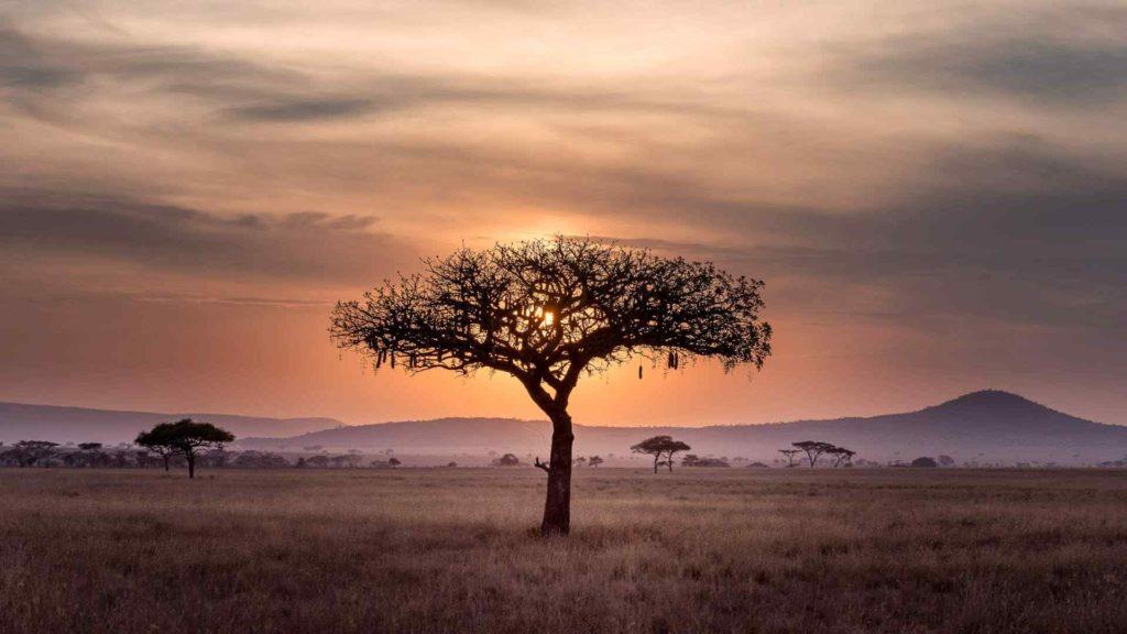 Custom-Travel-Planner-Network-Tanzania-Serengeti