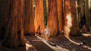 Custom-Travel-Planner-Network-USNP-Sequoia-CA