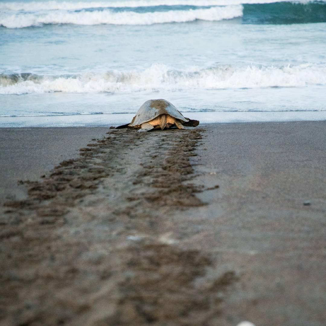 Custom-Travel-Planner-Network-10-SM-Costa-Rica-Sea-Turtles